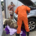 Corpo de Bombeiros resgata gatinho preso em motor de caminhonete em Quixadá